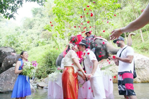 Elephant Wedding Package